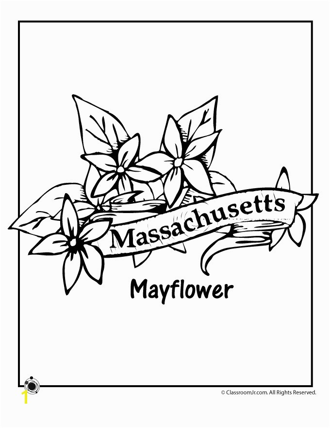 Massachusetts Flag Coloring Page Awesome State Flower Coloring Pages Massachusetts State Flower Coloring Page Stock