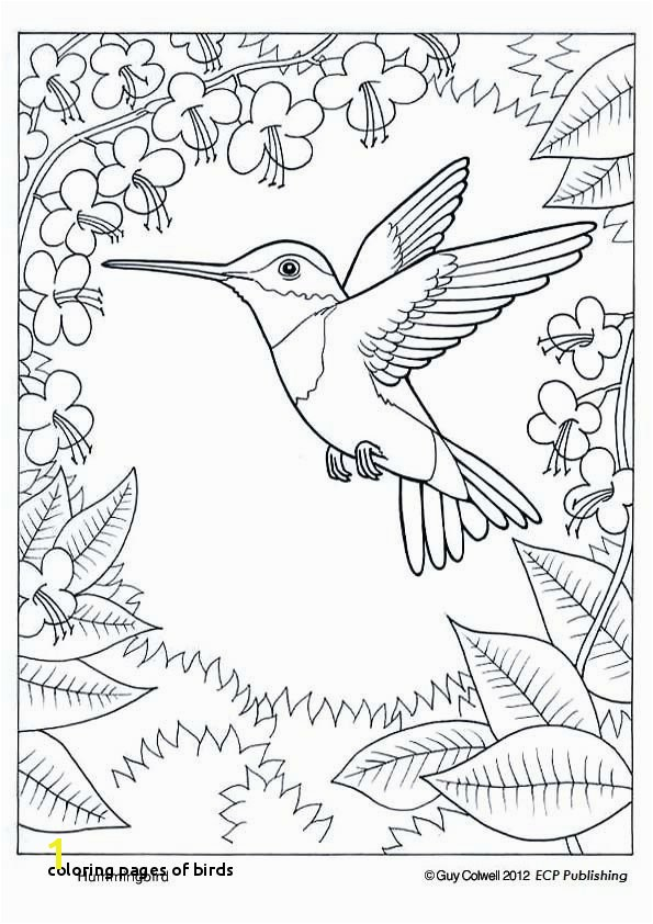 29 Coloring Pages Birds