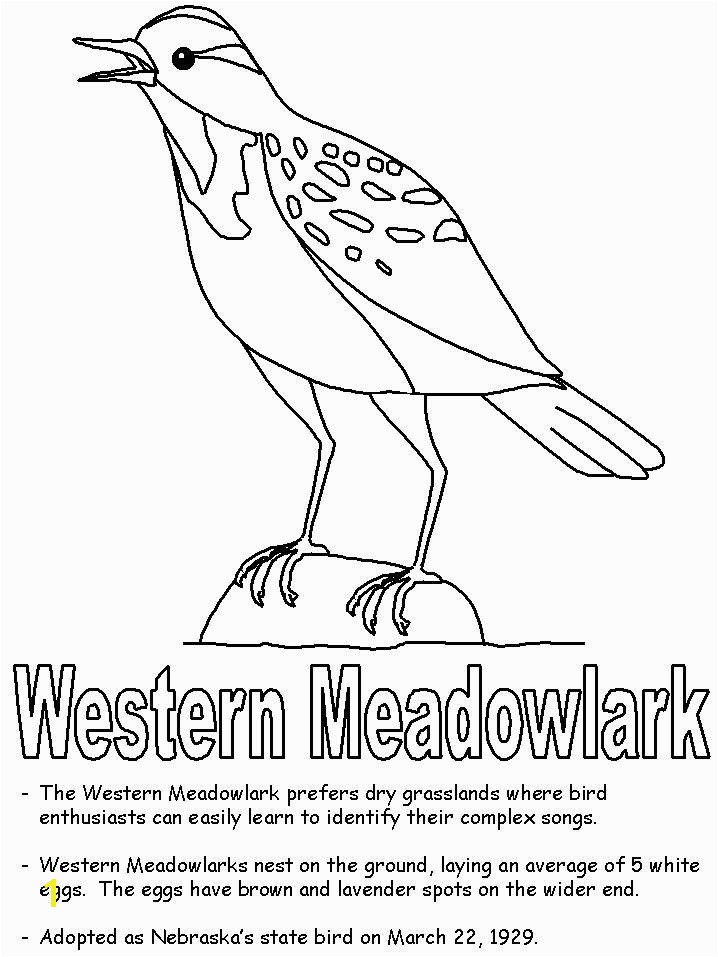 Meadowlark Coloring Page Beautiful Printable Bird Coloring Pages