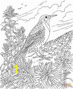Friends Across America Free Printable Coloring Page Wyoming State Bird and Flower Western Meadowlark Indian Paintbrush educational printables