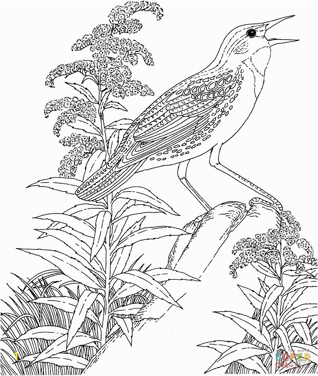 Meadowlark and Wild Sunflower Kansas State Bird and Flower