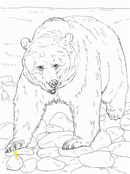 Mean Bear Coloring Pages Realistic Grizzly Bear Coloring Page