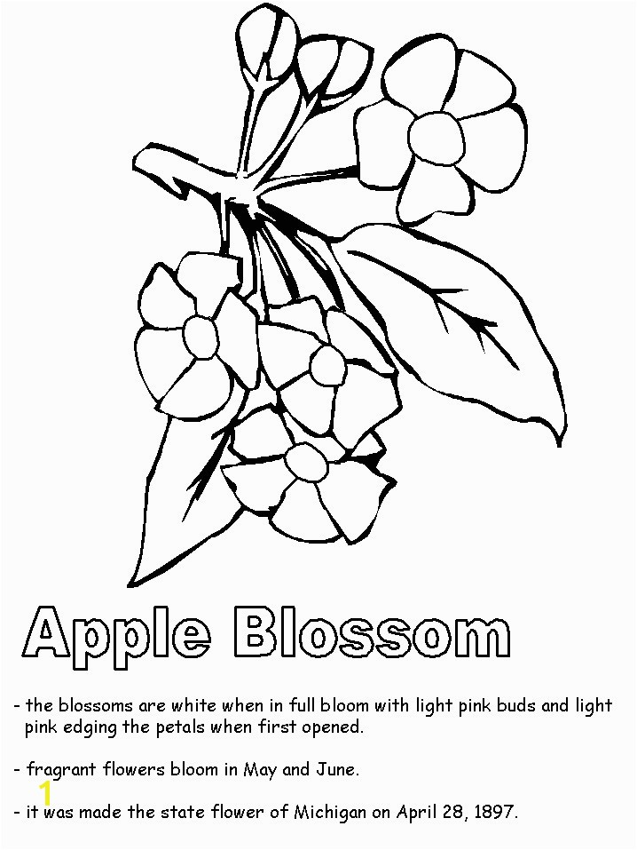 Michigan State Flower Coloring Page Unique Apple Blossom Line Drawing at Getdrawings