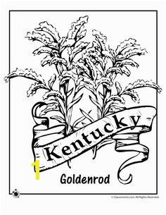 State Flower Coloring Pages Kentucky State Flower Coloring Page – Classroom Jr