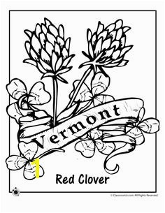 State Flower Coloring Pages Vermont State Flower Coloring Page – Classroom Jr