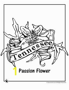 State Flower Coloring Pages Tennessee State Flower Coloring Page – Classroom Jr