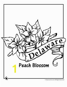 State Flower Coloring Pages Delaware State Flower Coloring Page – Classroom Jr