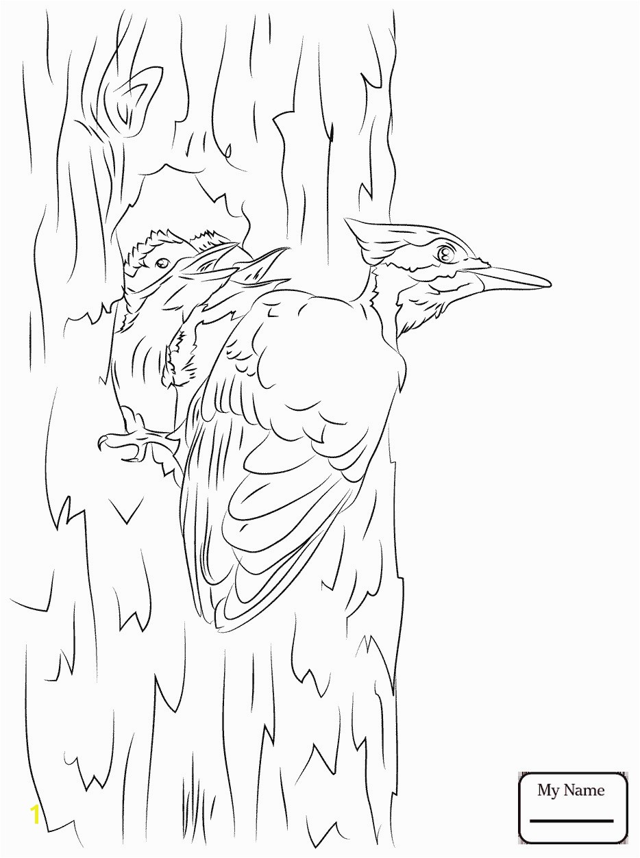 Pileated Woodpecker Coloring Page Fresh Big Downy Woodpecker Coloring Page Woodpeckers 2417 Unknown Pileated Woodpecker