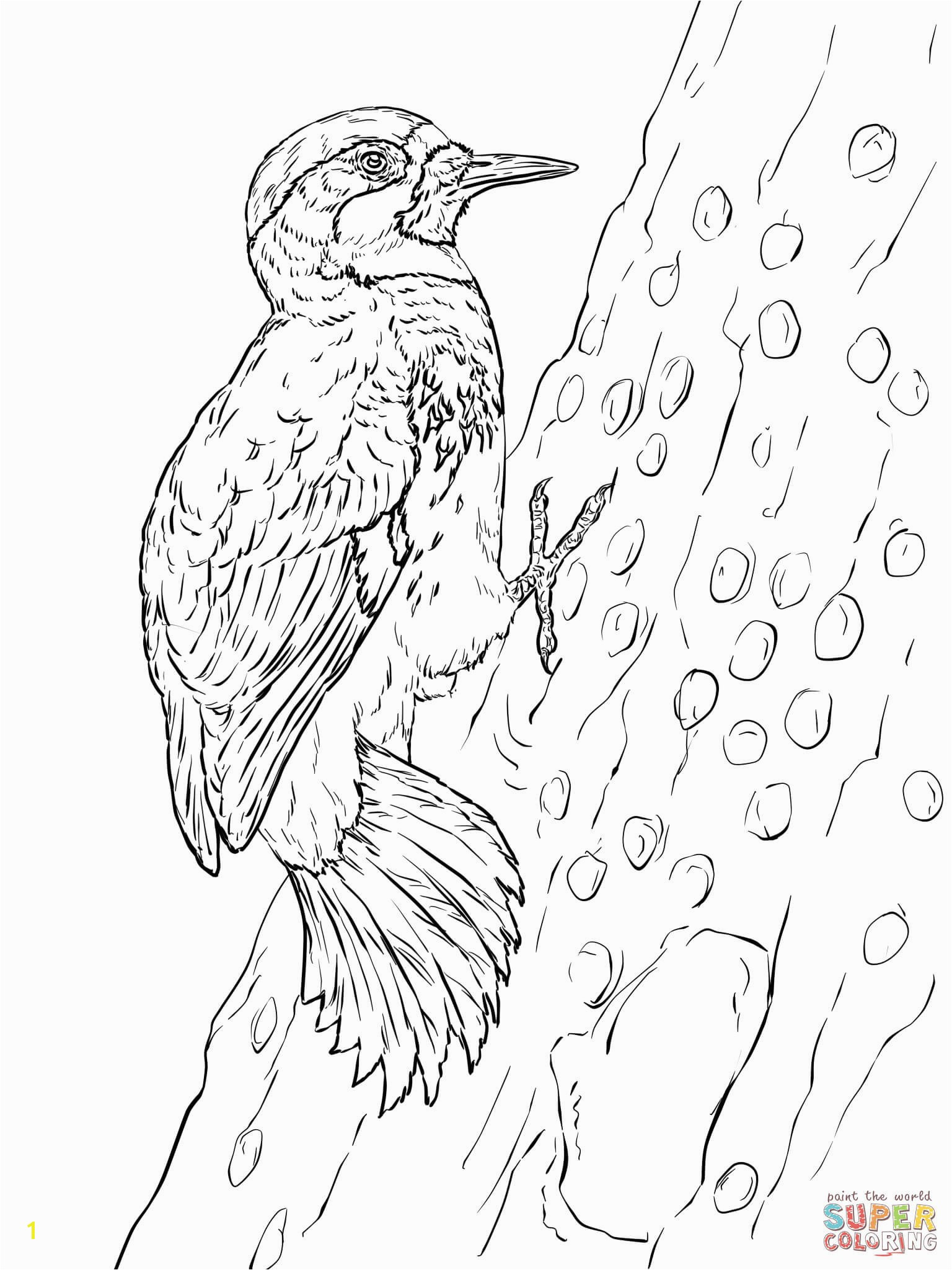 Pileated Woodpecker Coloring Page Elegant Timely Woodpecker Coloring Page Woodpeckers Pages Free 5576 Pileated Woodpecker