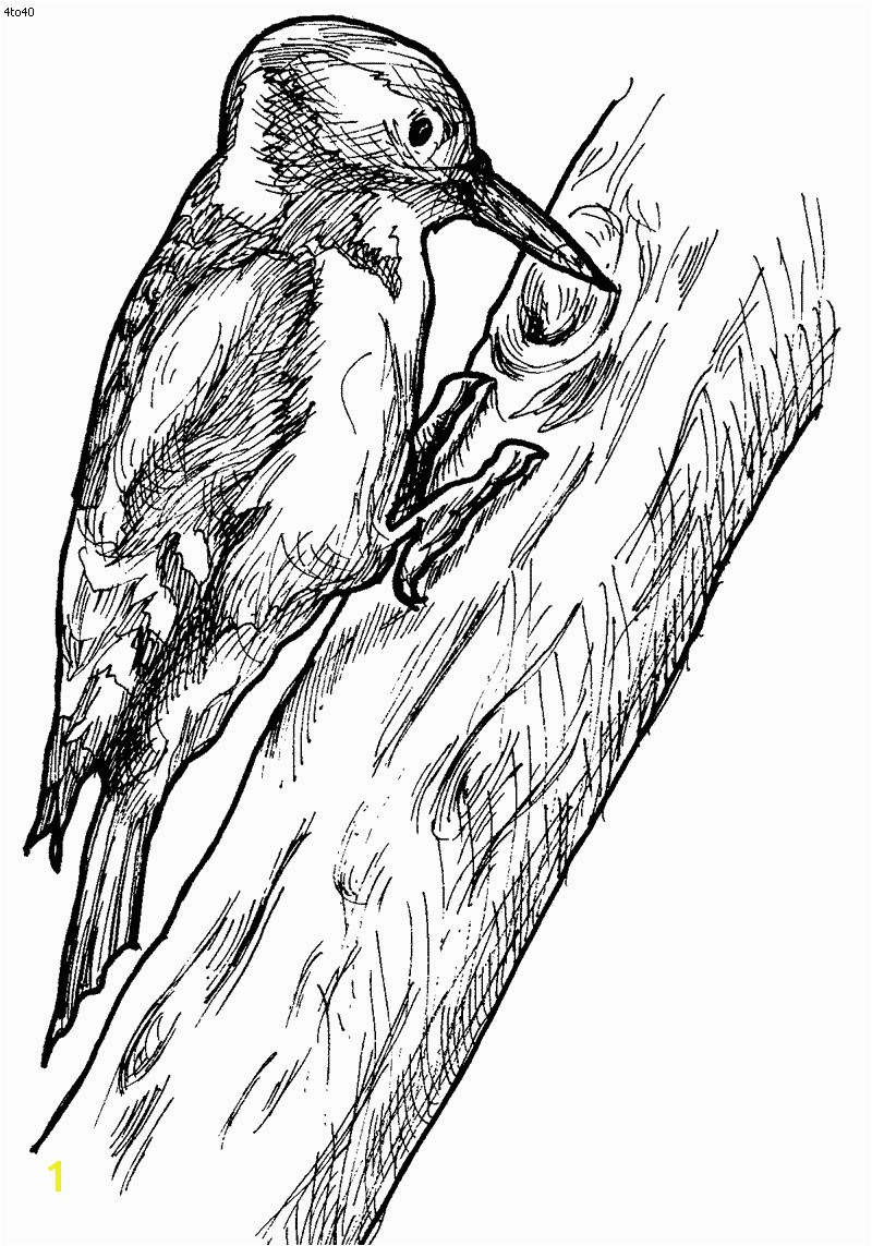 Pileated Woodpecker Coloring Page Luxury Woodpecker Coloring Page Woodpecker Fun Stuff Pileated Woodpecker Coloring Page