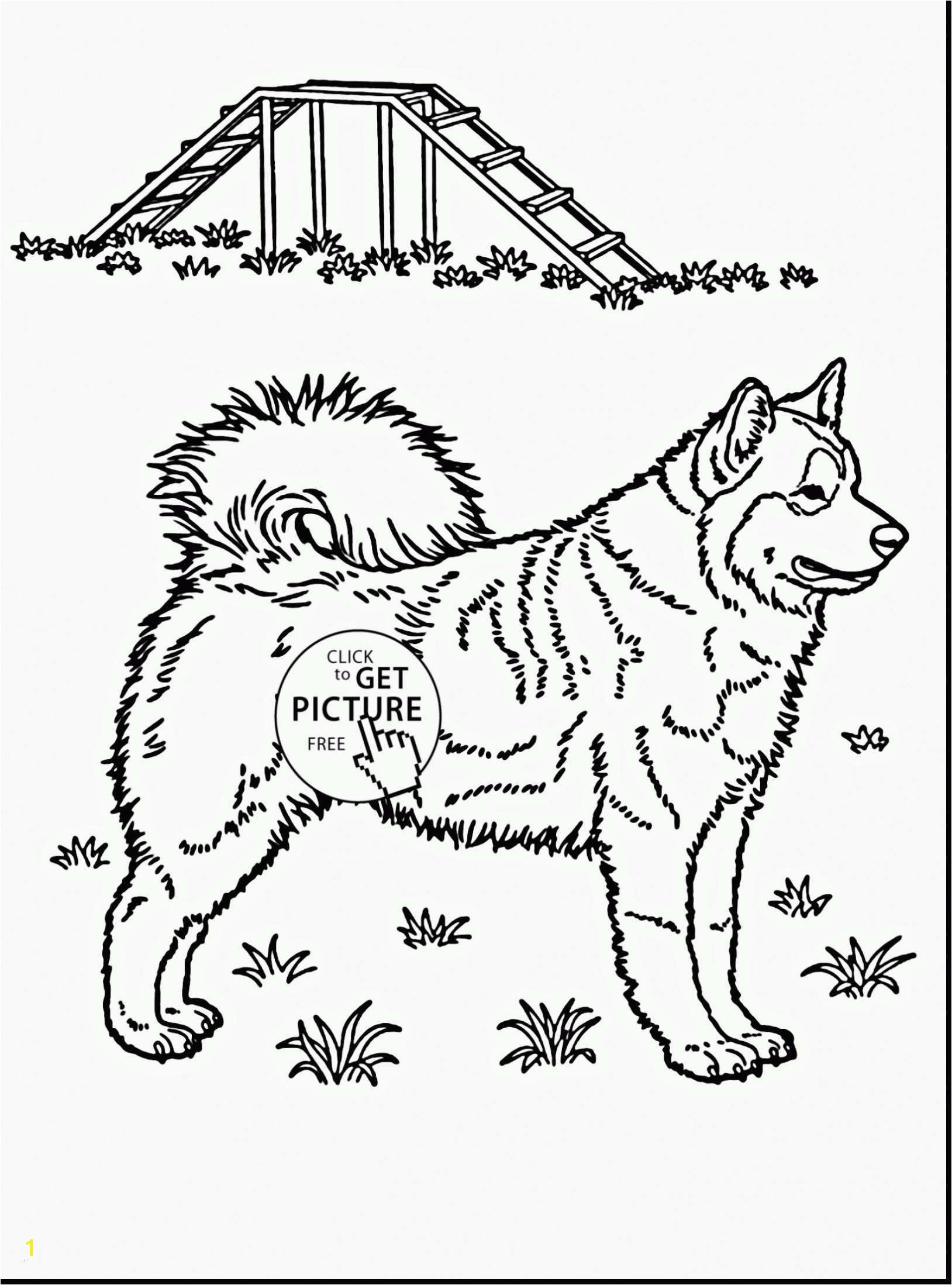 Husky Coloring Pages Elegant Husky Coloring Pages Beautiful Husky Coloring 0d Free Coloring Pages Drawing Indian