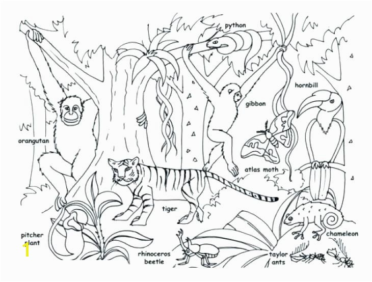 Animals Coloring Pages Tropical Jungle And Page Kids Colouring Amazon Rainforest