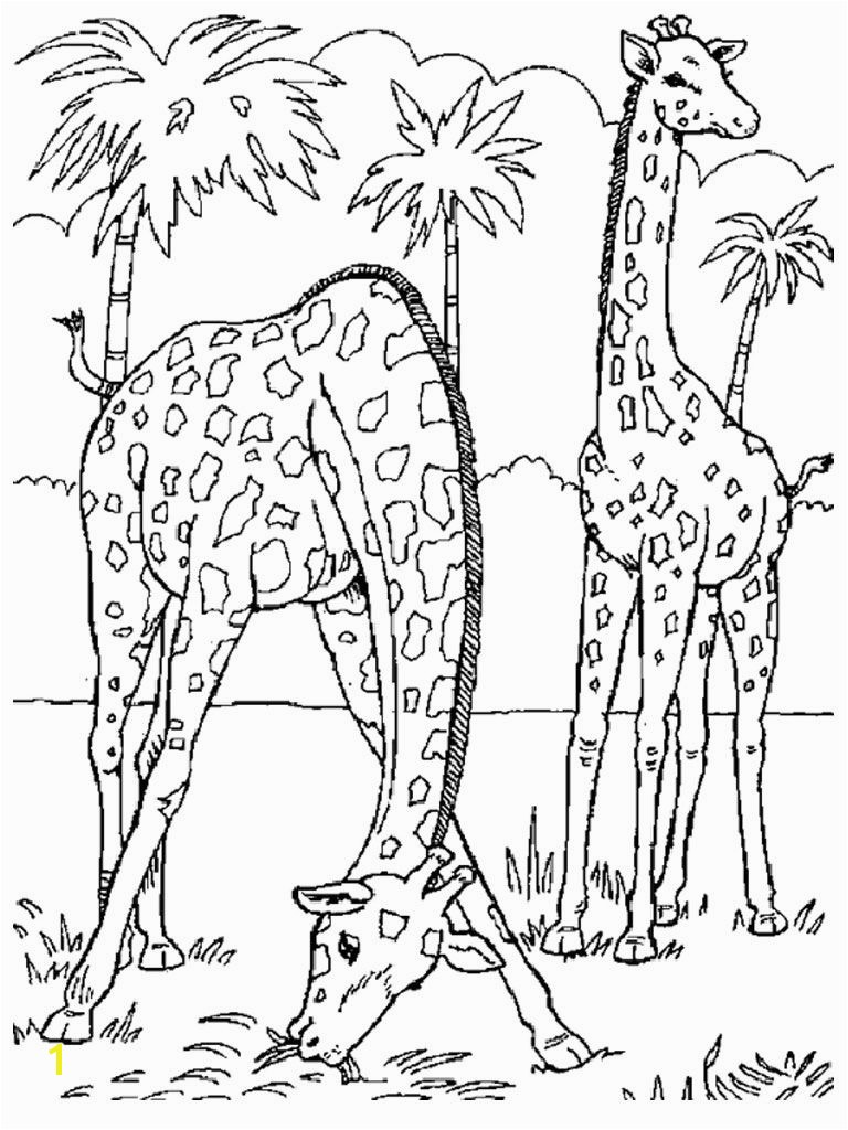 18fresh Realistic Animal Coloring Pages More Image Ideas