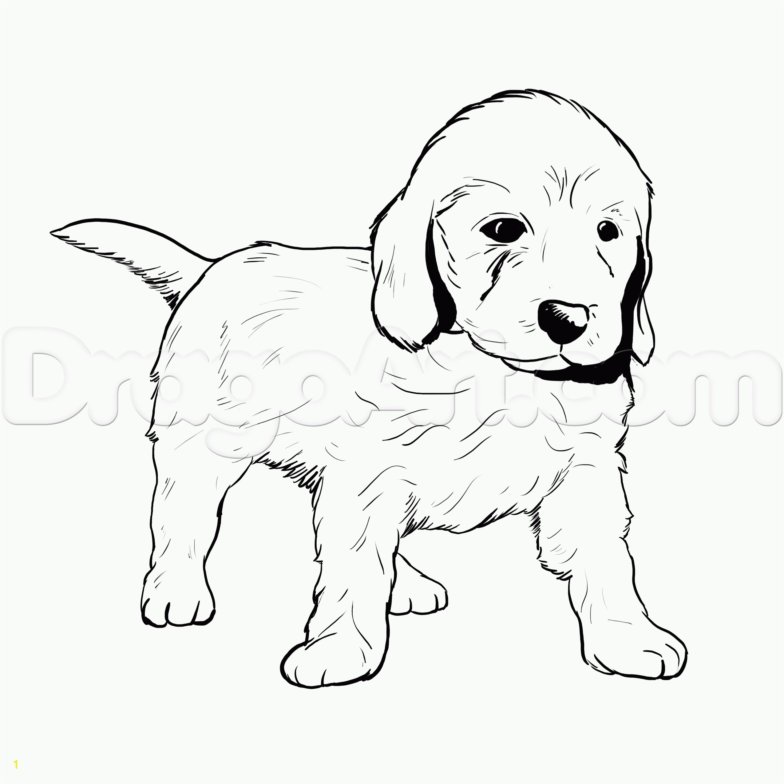 Big Rottweiler Puppies Coloring Pages Free Goldendoodle Color Sheets