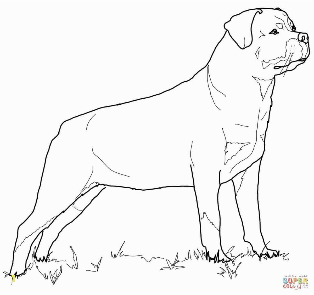 Rottweiler Animal Coloring Pages Puppy
