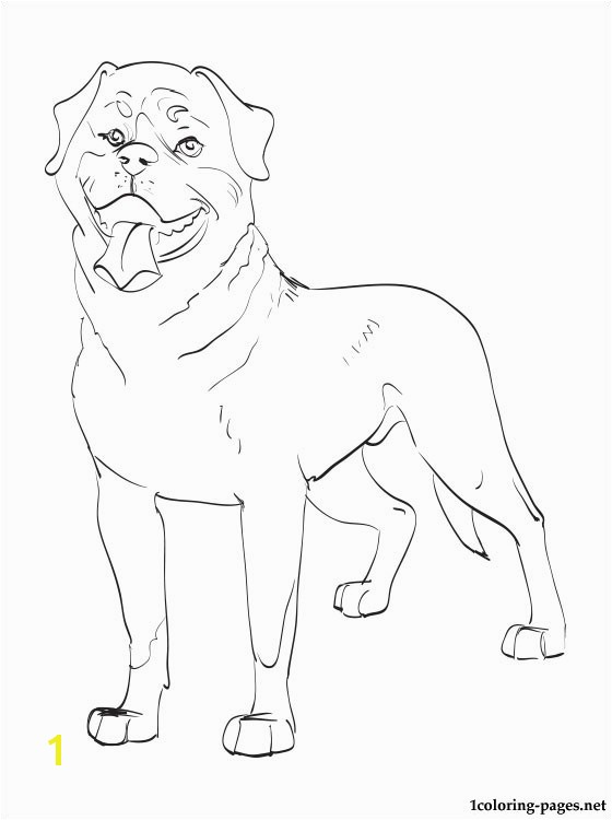 560x750 Rottweiler coloring page Coloring pages