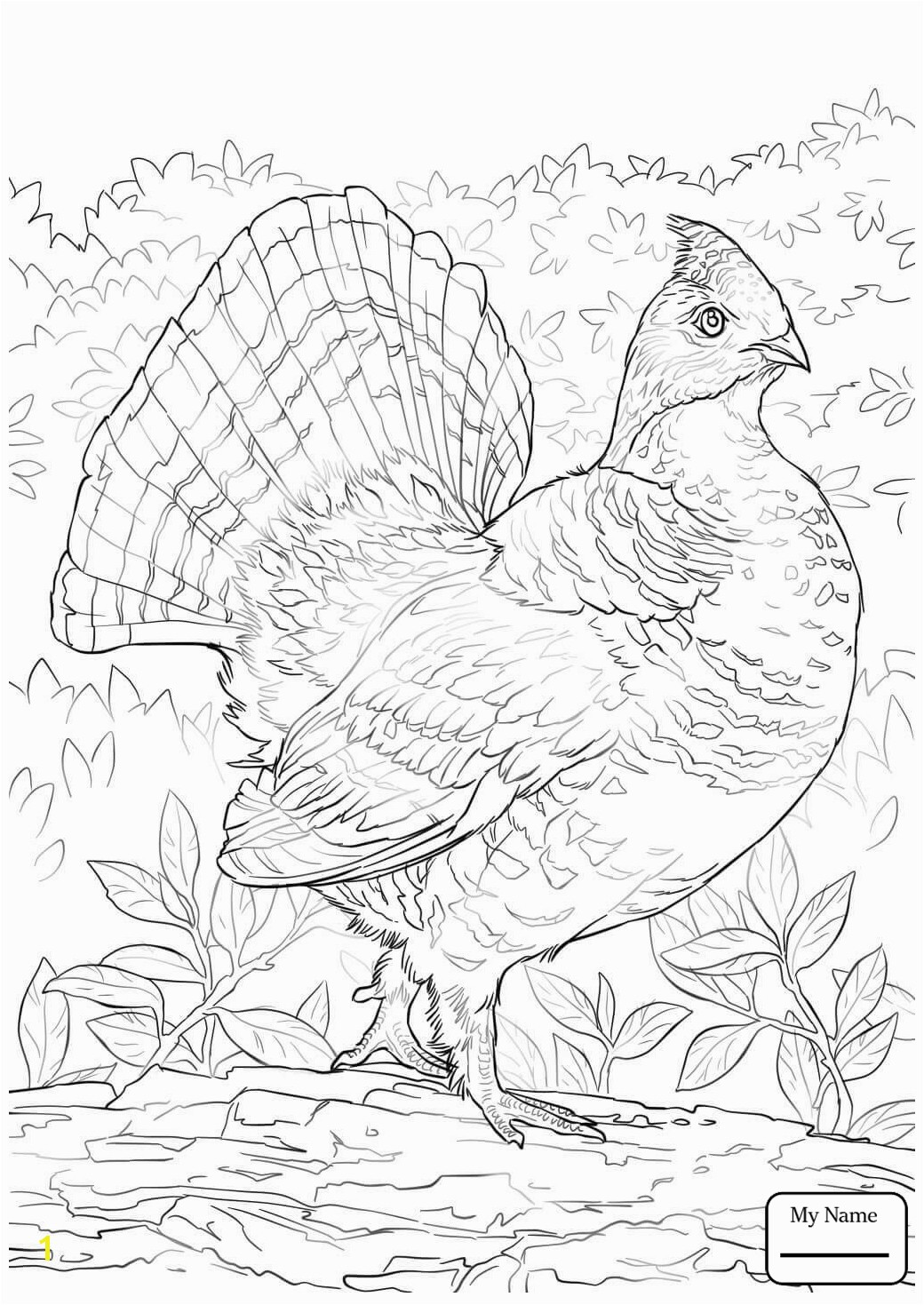 Printable Crammed Ruffed Grouse Coloring Page Best to Unknown Awesome Free Printable Coloring Page Best