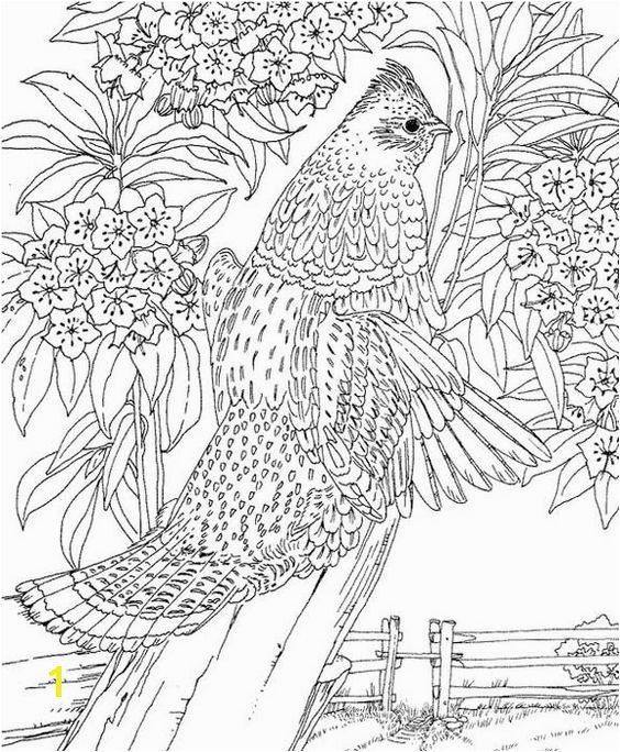 Pennsylvania Ruffed Grouse Coloring Page Purple Kitty Coloring Pages & Tips Pinterest