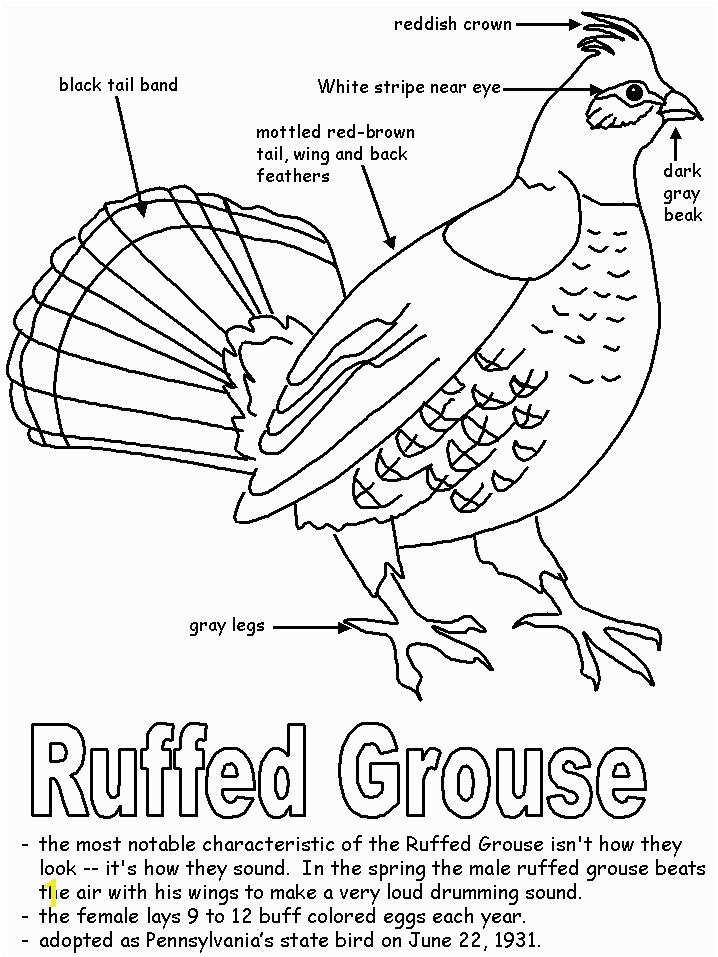 Ruffed Grouse Coloring Page Ruffed Grouse for Pa History Lapbook Homeschool Stuff