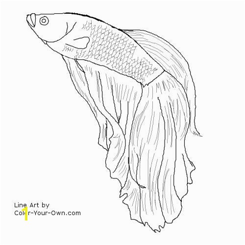 Betta Fish I m gonna try to draw this for my friend she is a Betta freak