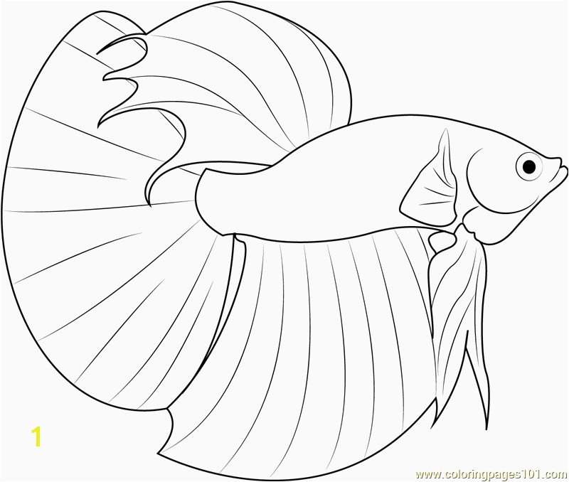 Realistic Fish Coloring Pages Best 60 Beautiful Siamese Fighting Fish Coloring Pages