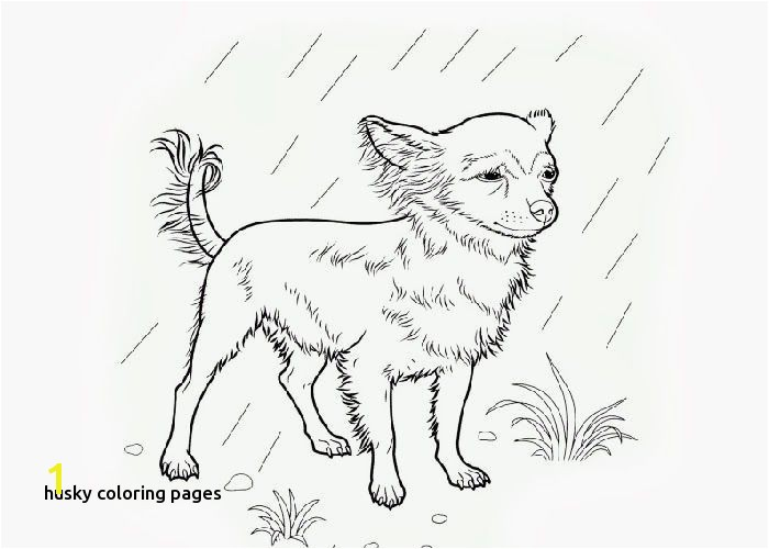 Chihuahua Coloring Pages Unique Beverly Hills Chihuahua Coloring Pages for Husky Coloring Pages Chihuahua Coloring