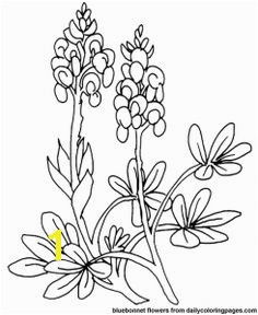 Texas Bluebonnet Coloring Page 177 Best Bluebonnets Images On Pinterest In 2018