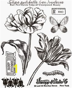 Texas Bluebonnet Coloring Page Texas Bluebonnet Flower Drawings Sketch Coloring Page