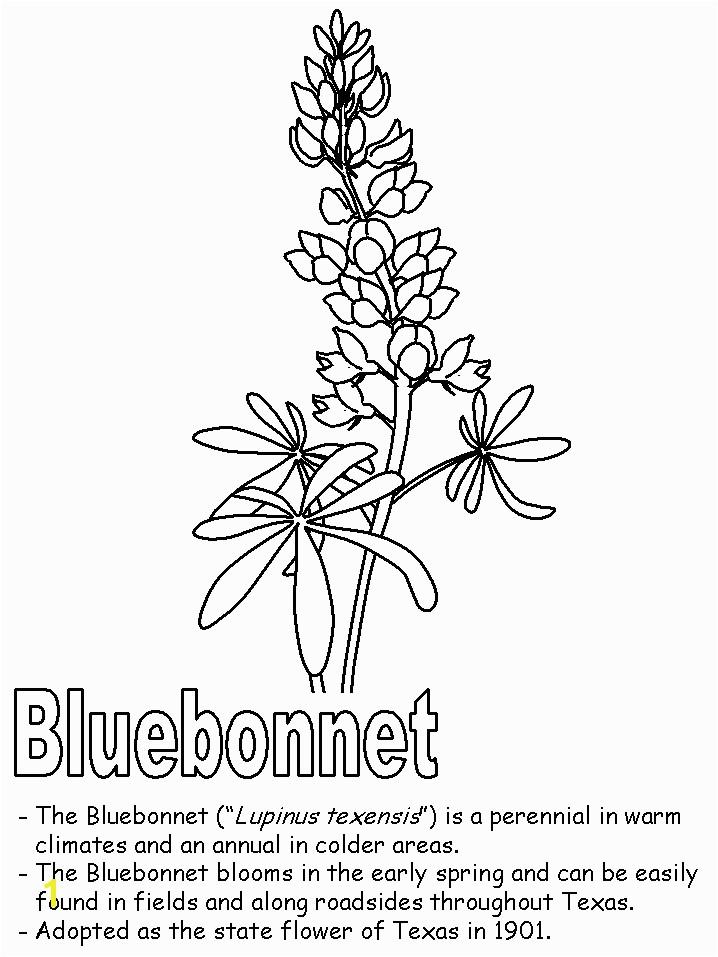 Texas Bluebonnet Coloring Page Texas Symbols