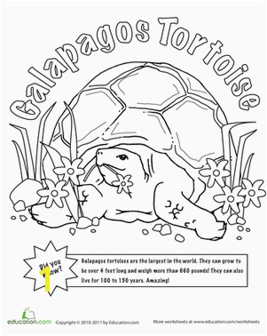 Color the Tortoise and the Hare