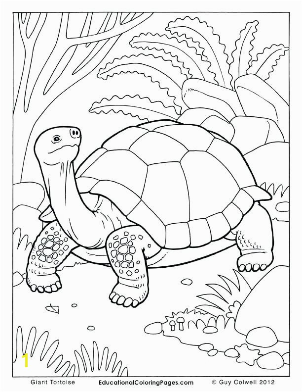 Tortoise and the Hare Coloring Page Inspirational Kids Drawing Book at Getdrawings Tortoise and the