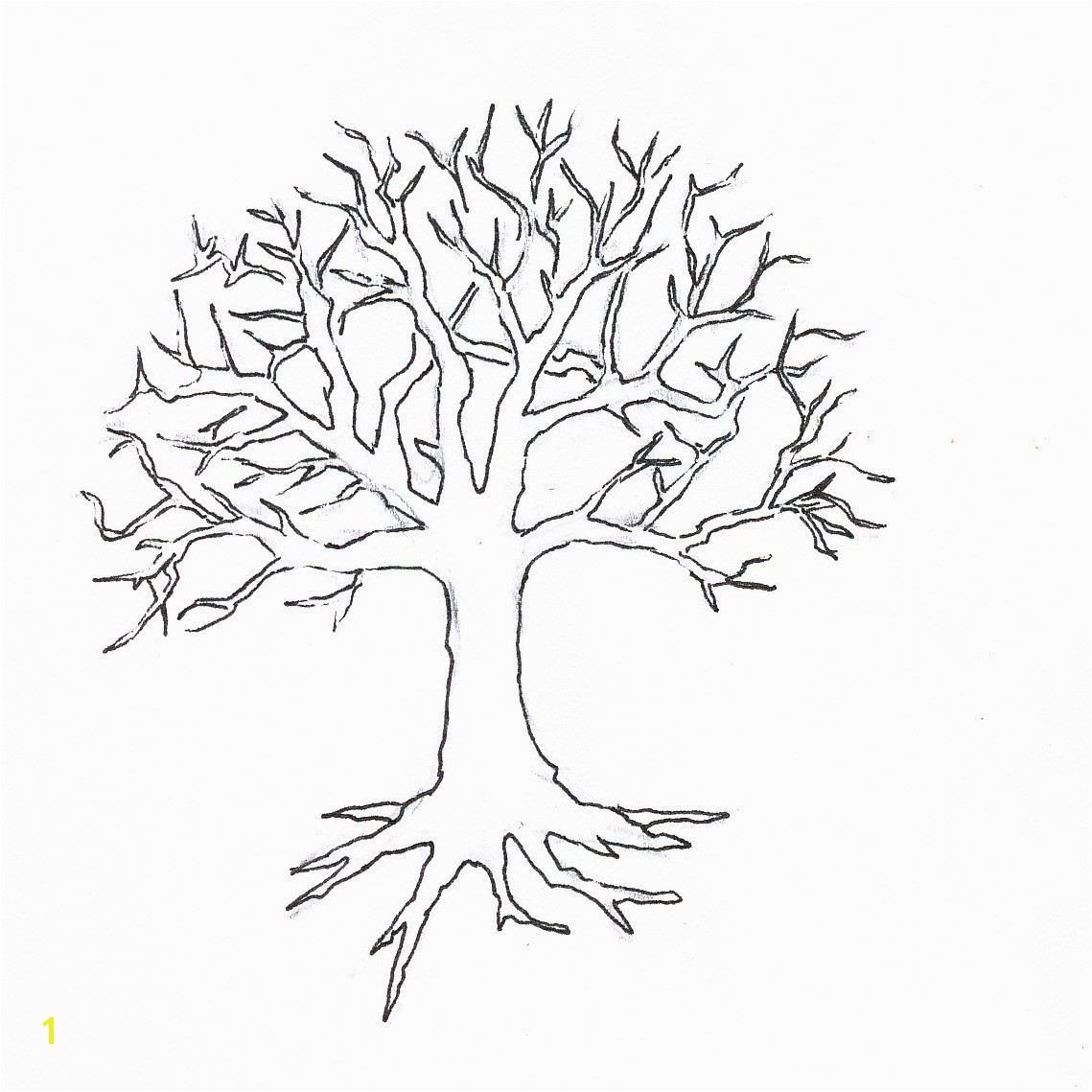 Coloring Page Tree With Roots 15 Unique Oak Leaf Beautiful