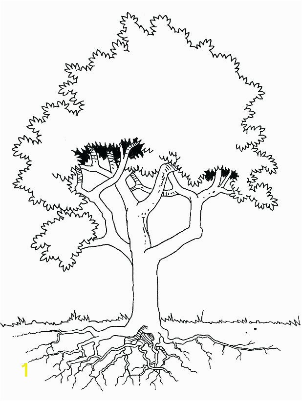 tree with roots coloring page the is seen in detail pages c