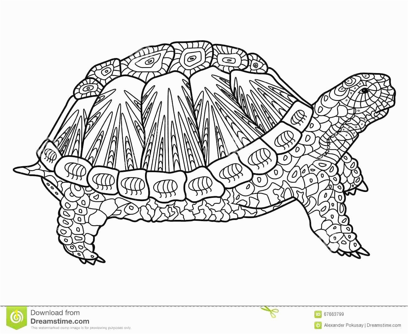 Helpful Turtle Coloring Pages For Adults Adult Brilliant