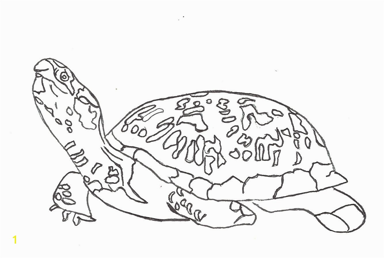 Turtle Coloring Pages For Adults 18cute Turtle Coloring Pages For Adults Clip Arts & Coloring Pages