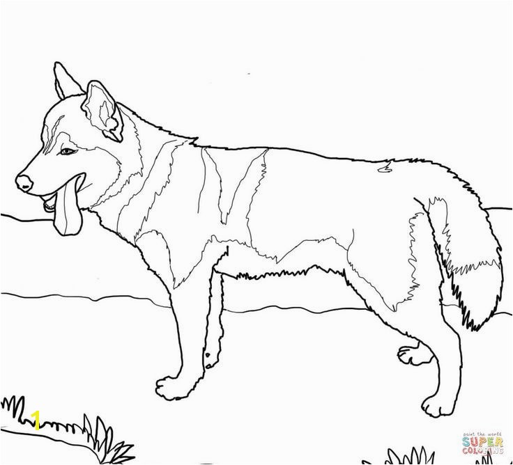 14 Fresh Washington Huskies Coloring Pages Stock