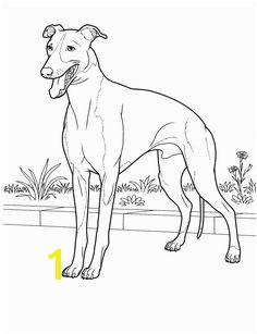dog coloring pages 24 Teenagers coloring pages