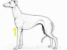 Whippet Coloring Pages 3167 Best Dog Patterns Images On Pinterest
