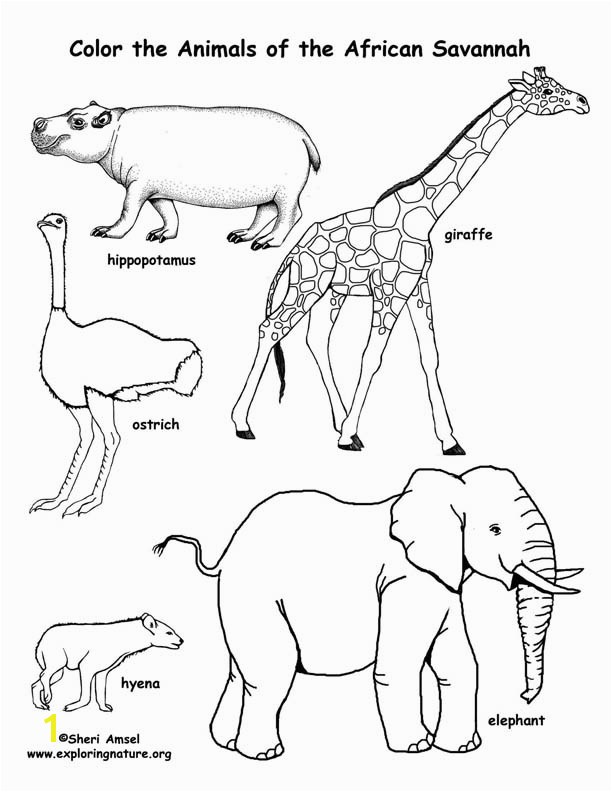 612x792 Savanna African Animals Coloring Page