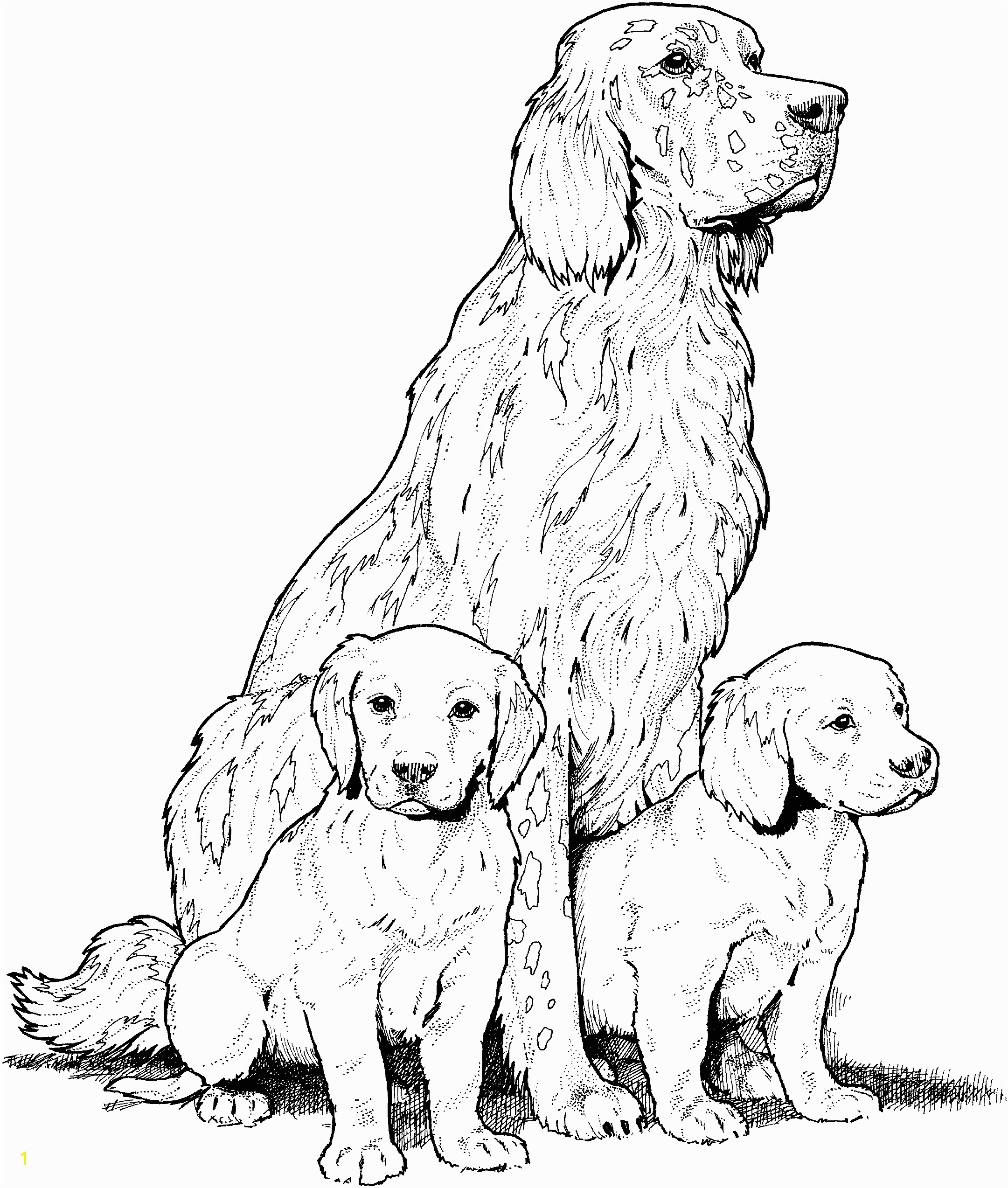 Dog Breed Coloring Pages Find beautiful coloring pages at TheColoringBarn