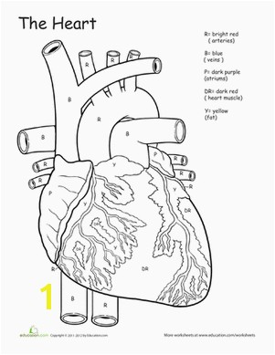 Fifth Grade Science Worksheets Awesome Anatomy If I ly Had a Heart