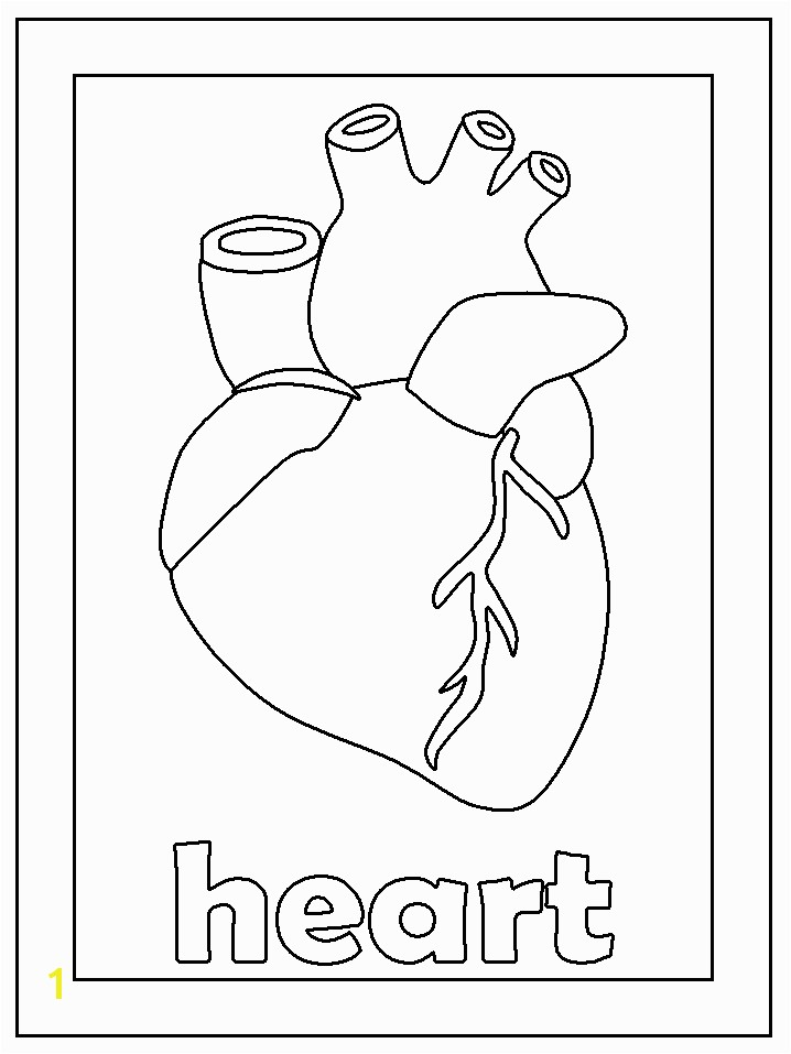 Coloring Pages The Human Heart For KidsKidsfreecoloring Net