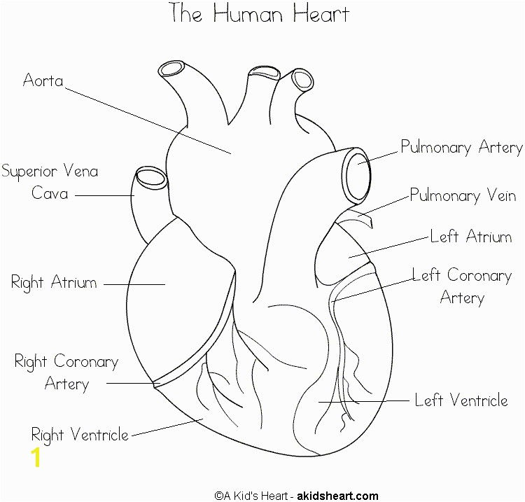 Anatomical Heart Coloring Pages Human Heart Coloring Page