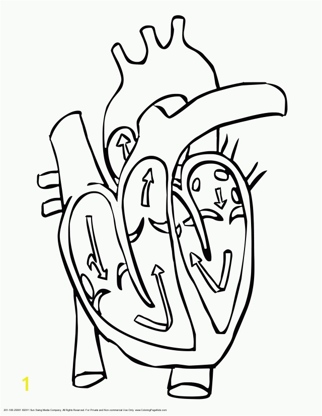 Human Heart Coloring Pages Free Coloring Pages For Kids