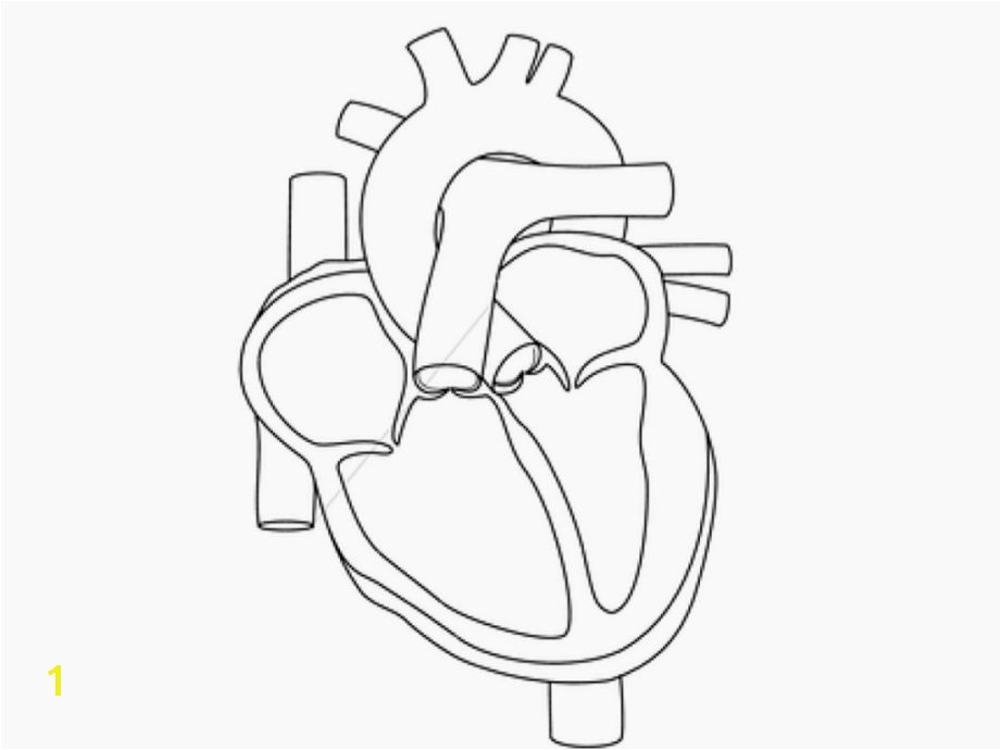 Human Heart Coloring Pages