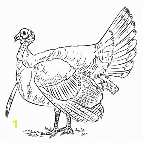 Black and White Turkey Coloring Pages Turkey Coloring Page