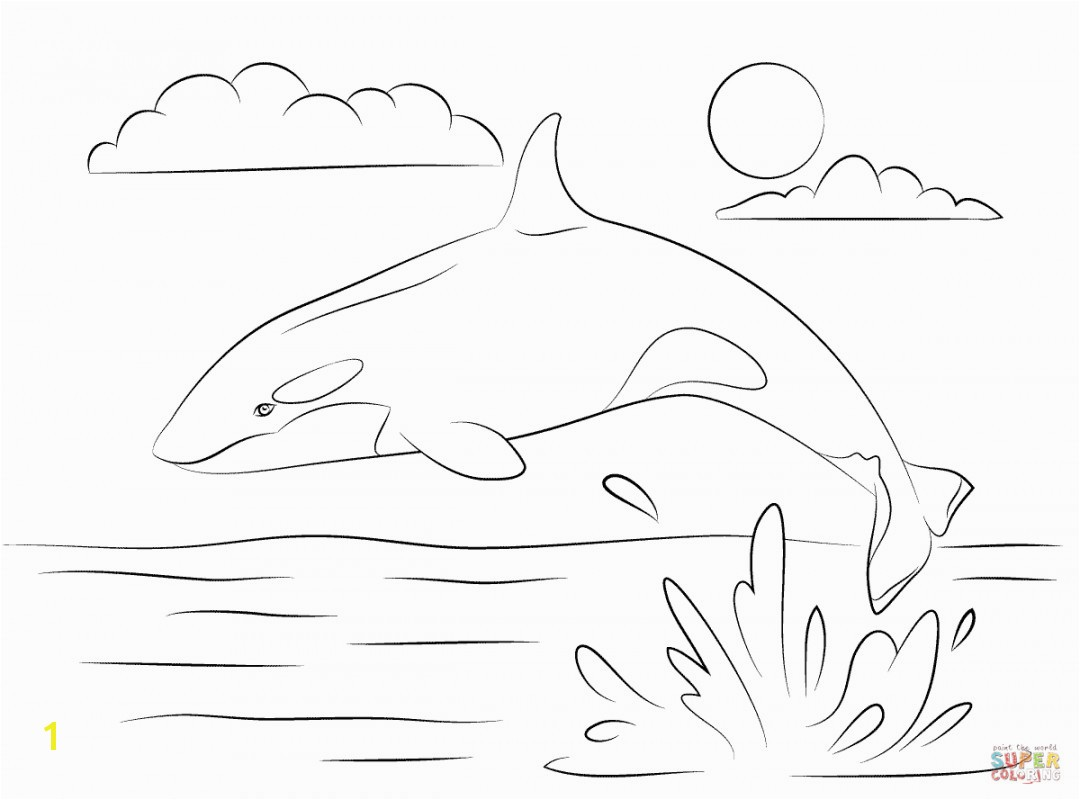 shamu coloring pages