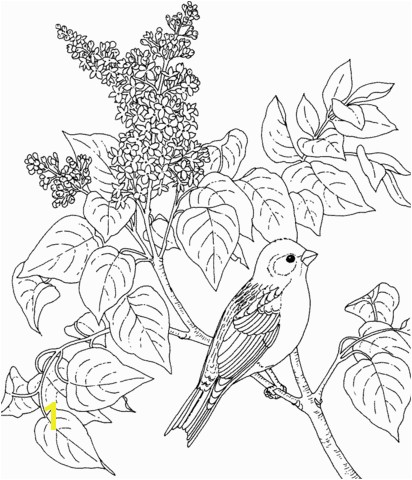 New Hampshire Purple Finch and Purple Lilac coloring page