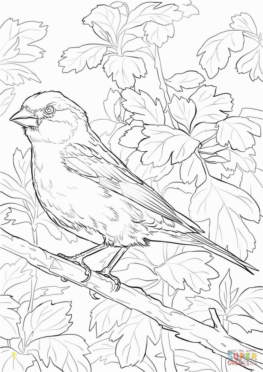 the Purple Finch coloring pages