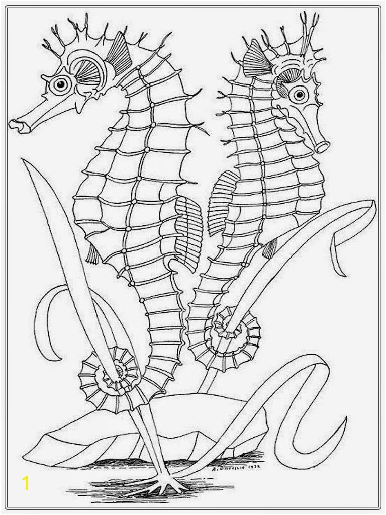 seahorse adult coloring pages
